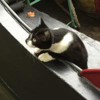 Little Venice boat cat